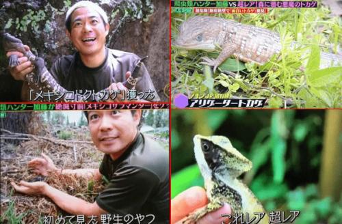爬虫類ハンター 加藤英明 嫁